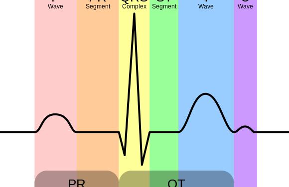 Electrocardiograma o ECG: observa tu corazón