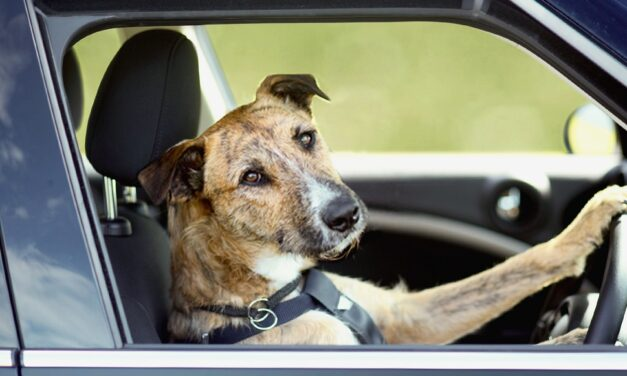 Perros guía: todo lo que necesitas saber
